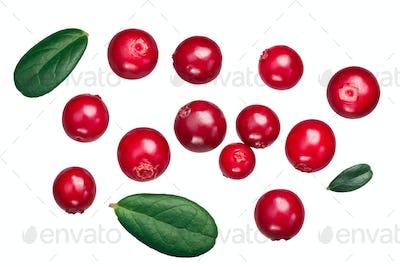 Lingonberry vaccinium vitis-idaea, paths, top