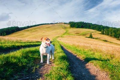 Alone white dog on mountains road