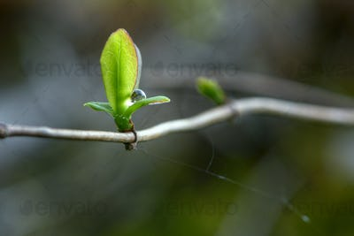 A drop  on green leaves