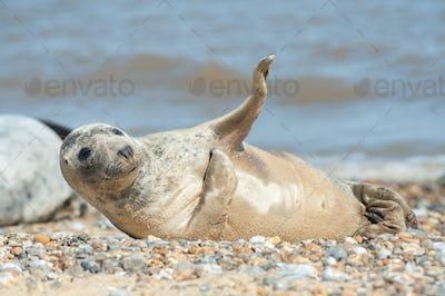 joyful seal on a beach