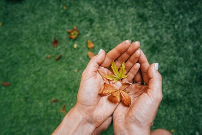 Yellow autumn leaves in the palm of a girl.