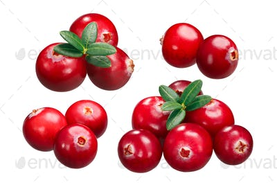 Cranberries v. oxycoccus piles, paths
