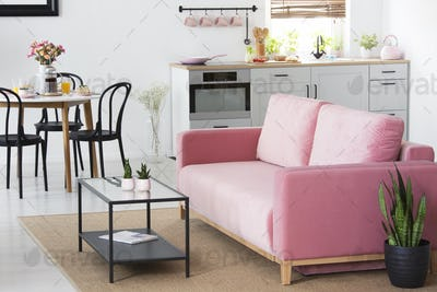 Plant next to pink sofa in apartment interior with chairs at din