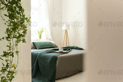 Green blanket and pillows on grey bed in minimal bedroom interio