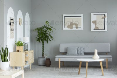 Posters above grey sofa in living room interior with plants next