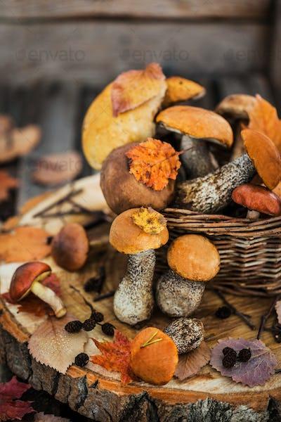 Autumnal wild forest edible mushrooms (boletus) in basket on rus