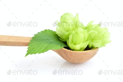 Hop cones (Humulus) on a wooden spoon isolated closeup on white