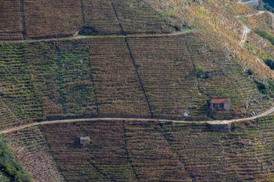 Landscape full of vineyards
