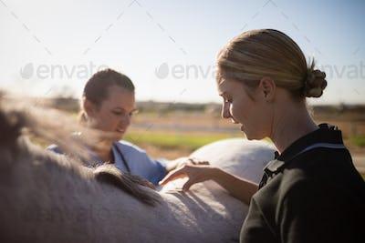 Female jockey with vet examining horse