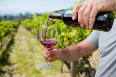 Mid section of vintner examining wine