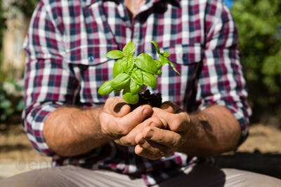 Mid section of man holding sapling in garden