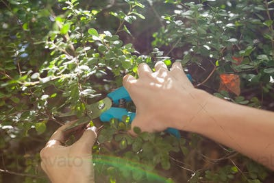 Cropped hands of woman cutting plants with pruning shears
