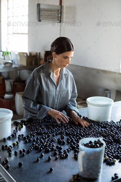 Worker checking a harvested olives in factory
