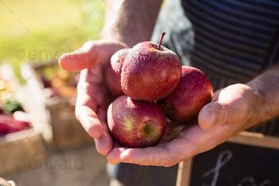 Farmer holding fresh apples