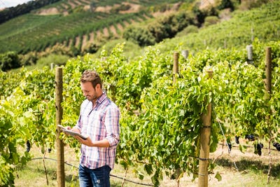 Man using phone and tablet at vineyard