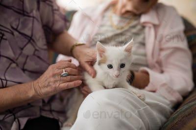 Midsection of senior females stroking kitten on armchair