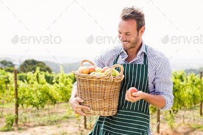 Smiling man with basket of apples at vineyard