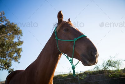 Horse standing in the ranch