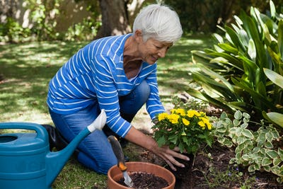 Smiling senior woman planting yellow flowers