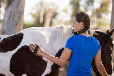 Rear view of female cleaning horse