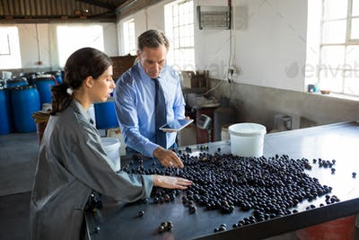 Manager instructing worker while checking a harvested olives