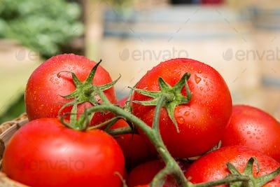 Fresh cherry tomatoes in wicker basket
