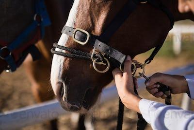 Hand of female vet adjusting horse bridle at barn