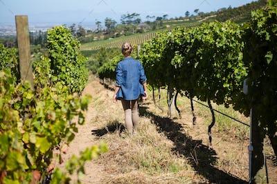 Rear view of female vintner walking in vineyard