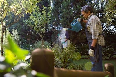 Senior man watering plants in garden