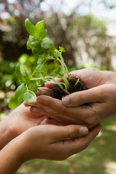 Cropped cupped hands of mother giving seedling to daughter