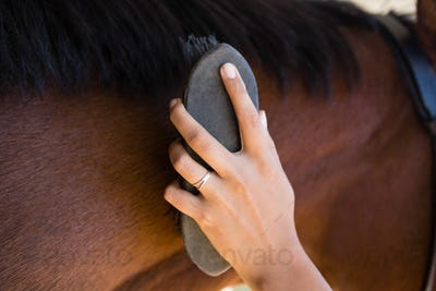 Cropped hand of woman brushing horse mane