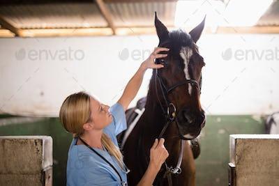 Female vet checking horse