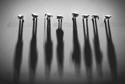 People figures standing in a row, casting shadows.