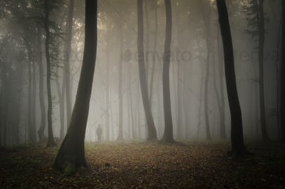 SIlhouette of man in mysterious woods with fog in late autumn
