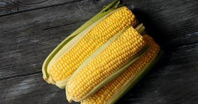 Raw yellow corncobs on gray table
