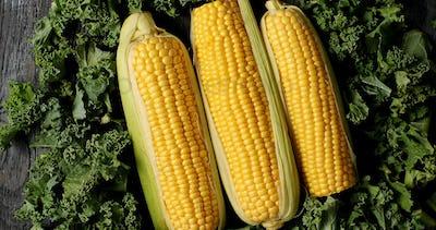 Ripe corncobs on green salad leaves