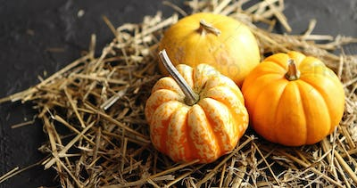 Three pumpkins on pile of hay