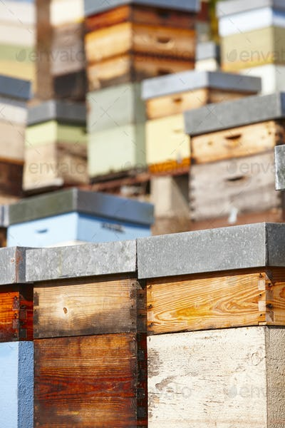 Beehives. Traditional colored wooden box. Muniellos, Asturias, Spain. Horizontal