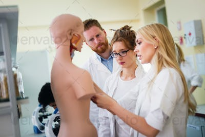 Students of medicine examining anatomical model