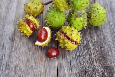 Chestnut on old wooden background