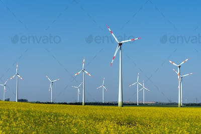 Yellow blossoming rapeseed and some wind energy plants