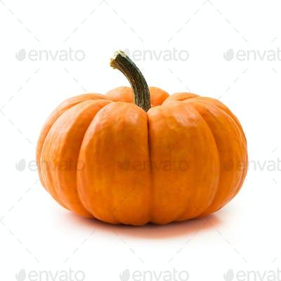 Fresh orange miniature pumpkin isolated