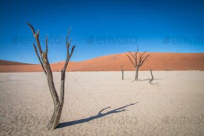 Dead trees in the Deadvlei desert.