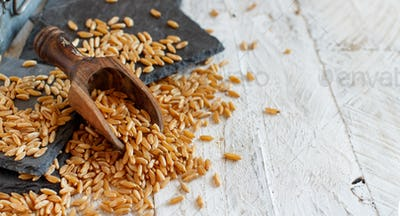 Raw Kamut grain with a wooden spoon close up