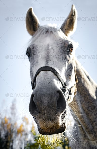 Close-up of a horse's nose