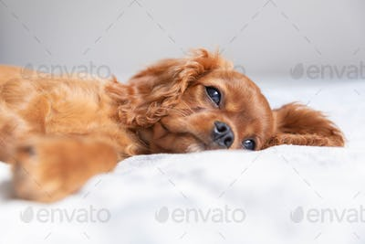 Cute puppy relaxing