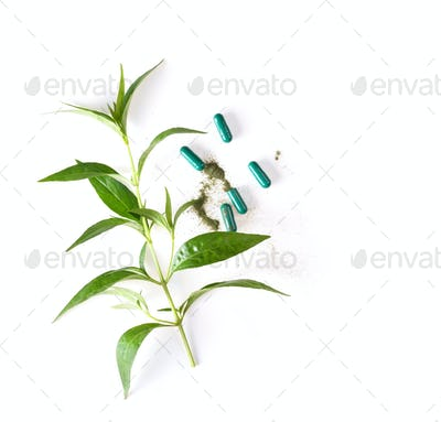 fresh kariyat herb plant and capsule on white background. top vi