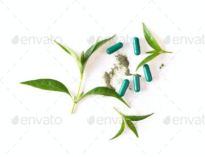 fresh kariyat herb plant on white background