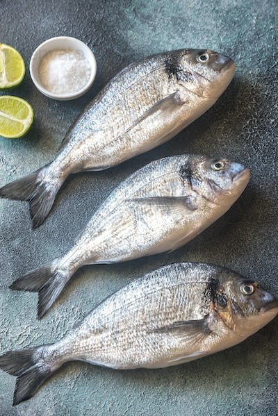Sea bream (dorada) fish