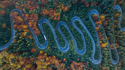 Curved road trough the forest